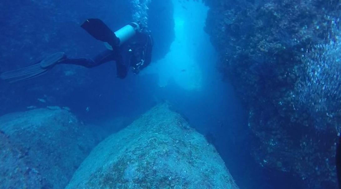 ダイビングをしながらメキシコの海洋環境調査を行うボランティア